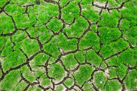 Growing on rainless soil photo