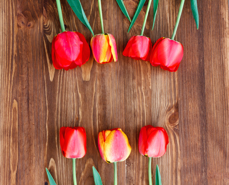 Seven tulips on a natural wooden background. Eco friendly.