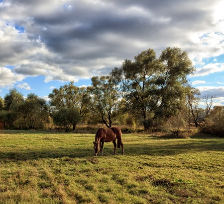 horseflesh: Horse grazing on a green meadow on a sunny day