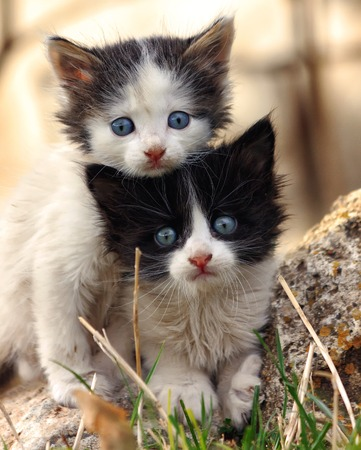 Two small scared kittens looking at the camera, clinging to each other Banco de Imagens