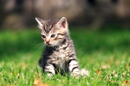 Sad striped kitten sitting on green grass, looking away from the camera