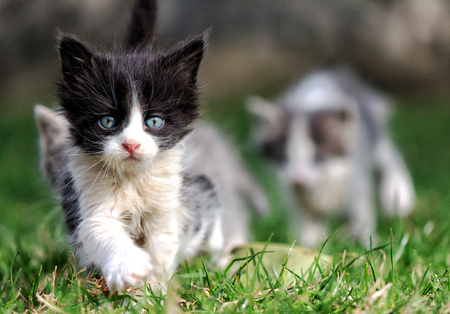 Kitty-leader leads his friends on the green grass