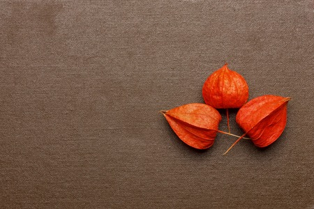 Three dry flowers on the book background
