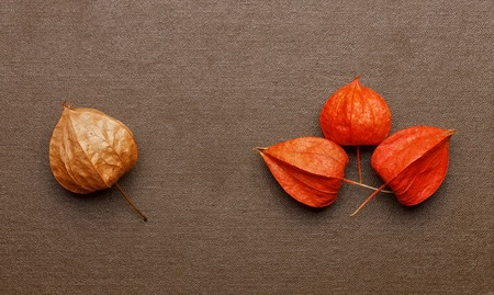 Four dried flowers in the brown background