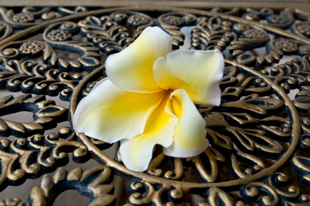 frangipani flower on th old steel table photo
