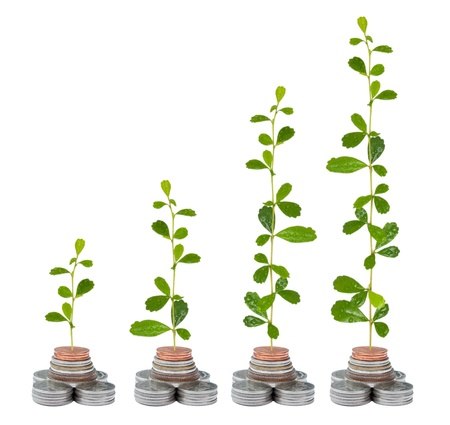 Tree growing in money isolated on the white background