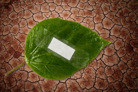 eco ecology or nature protection concept with leaf and bandage on dry soil arid areas background photo