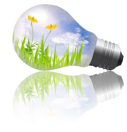 gelbe Blume mit Gras wächst im Inneren der Glühbirne Standard-Bild