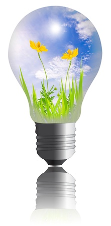 yellow flower with grass growing inside the light bulb  isolated on white background
