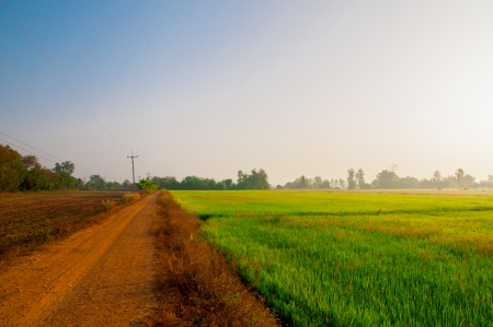 country road with green rice field photo