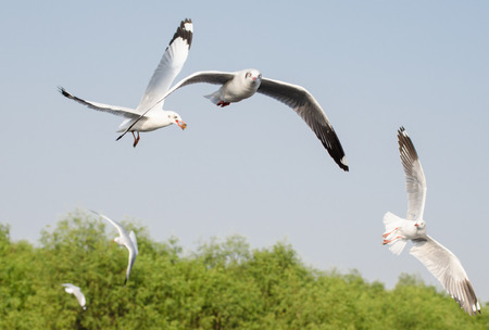 hijacked: Business competition concept, four seagull birds food snatch isolated on blue