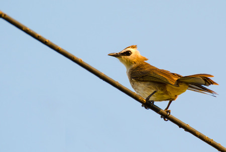 The bird stand on power line isolated on blue photo
