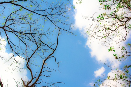 tree and blue sky photo