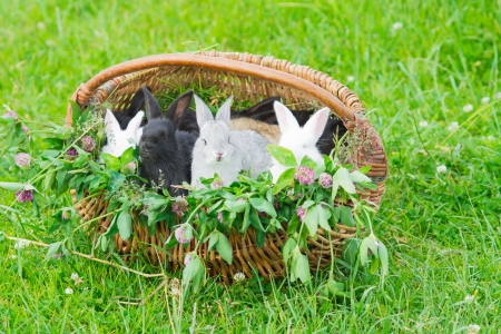 Rabbits in a basket Stock Photo - 14352063