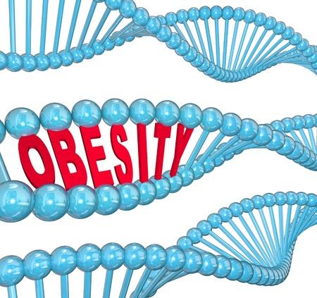 obesidad: La palabra obesidad en letras rojas ocultos dentro de una cadena de ADN azul para ilustrar el carácter hereditario de la grasa y la condición de ser muy pesado