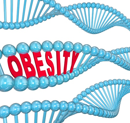hereditary: The word Obesity in red letters hidden within a blue DNA strand to illustrate the hereditary nature of fat and the condition of being very heavy