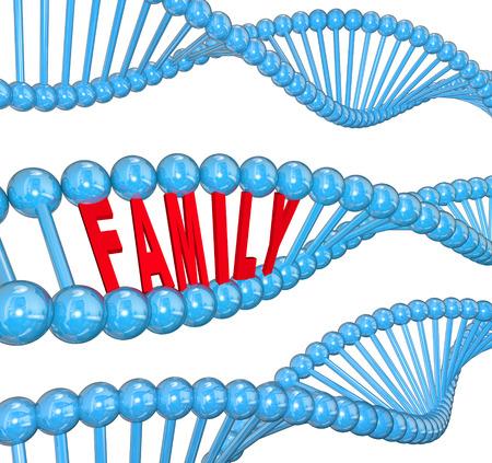 Palabra familiar en una hebra de ADN 3d para ilustrar los rasgos o atributos pasados ??de una generación a otra hereditarios Foto de archivo - 24543182