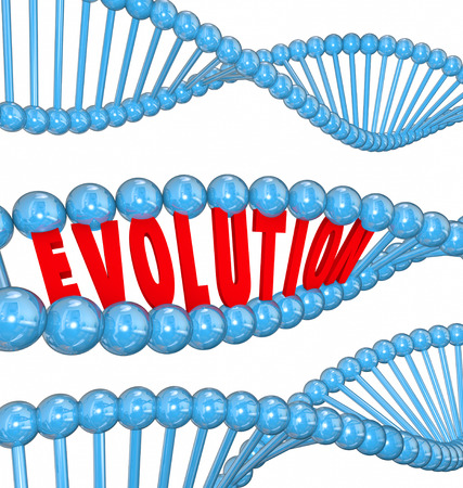 evolved: Evolution word in red 3d letters in a strand of DNA as a symbol of science and research into the origin of humanity Stock Photo