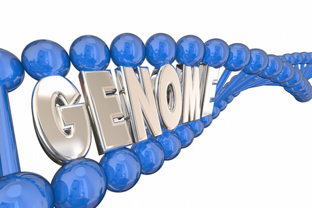 genes: Genome 3d Illustration Word DNA Strand Genetics Heredity Stock Photo
