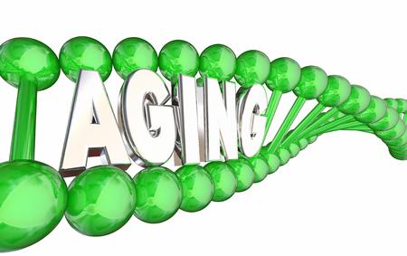 Veroudering DNA Strand Erfelijkheid Genen Oudere 3D Illustratie Stockfoto
