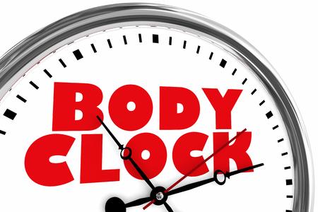 Body Clock Health Timer Lifestyle Living 3d Illustration