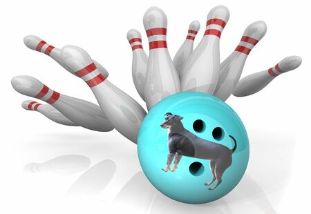 Hund Haustier Tier Bowling Ball Strike Pins Gewinnspiel 3D-Illustration
