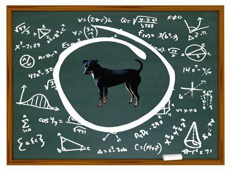 Dog Pet Animal Chalk Board Class Training Education 3d Illustration