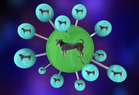 Dog Pet Animal Network Spreading Puppy Litters 3d Illustration