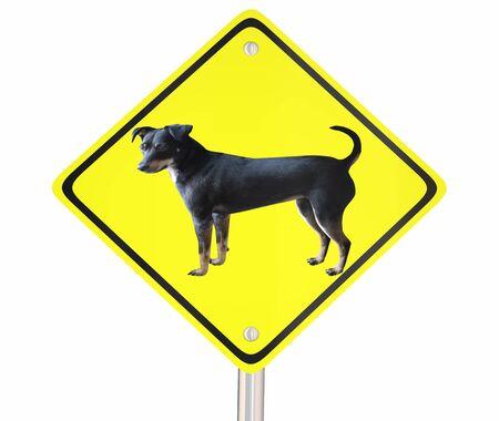 Dog Pet Animal Warning Sign Park Zone 3d Illustration