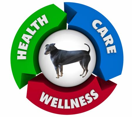 Pet Dog Animal Health Care Wellness Cycle 3d Illustration