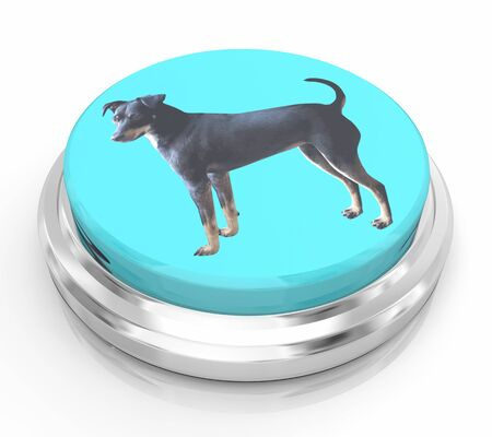 Dog Pet Animal Button Press Push Instant Service 3d Illustration 写真素材