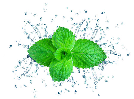 mint splash water isolated on a white background Stock Photo
