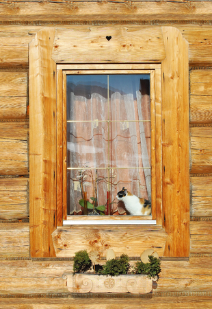 colorful cat sitting on a window in a wooden house