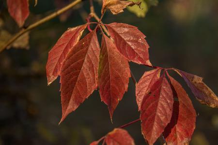 spaciousness: autumn