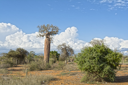madagascar: Madagascar, nature, nachionalny Park Stock Photo