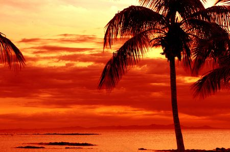 orange sunset on tropical island with palm Stock Photo - 3836076