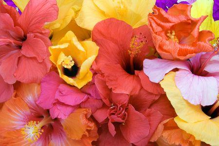 Tropical Flowers - Hibiscus und Bougainvillea Lizenzfreie Bilder