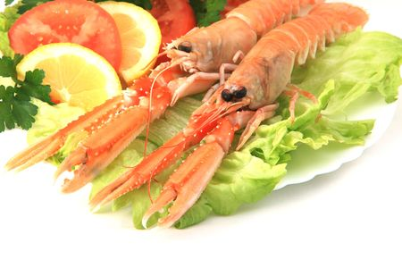 Norway lobster Stock Photo - 4332219