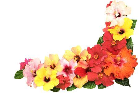 Corner with hibiscus flowers