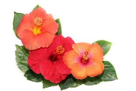 Corner with hibiscus flowers photo