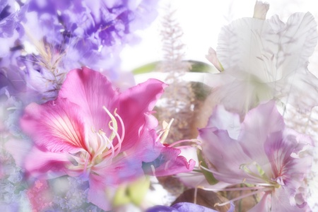 pastel flowers: beautiful flowers made with soft focus Stock Photo