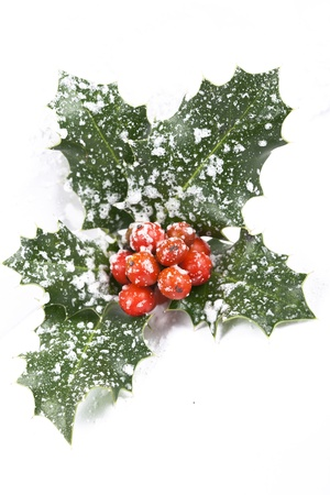 Real holly berries and leave photo