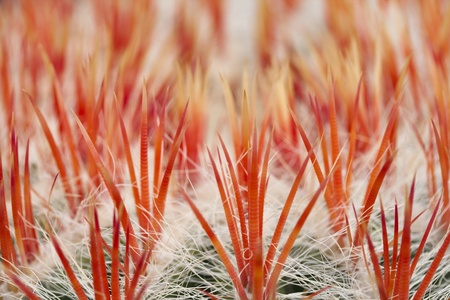 concurrent: close up of an cactus