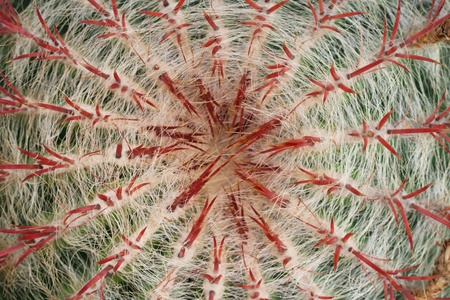 concurrent: Top view of a cactus