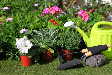 planting flowers with garden tools ,various flowers and herbs in flower pots  photo
