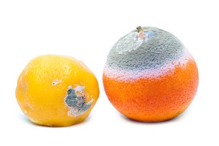 smell: Moldy rotten orange and lemon fruit isolated on white Stock Photo