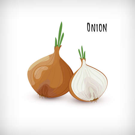 Onion whole and half with green leaves, roots in flat style. Vegetable organic eco bio farm product. Lettering Onion. Spice plant condiment collection. Vector illustration.