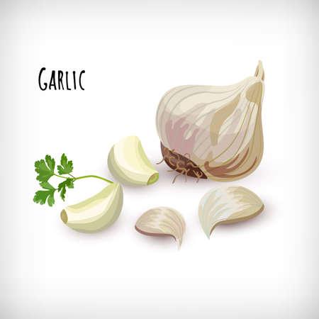 Garlic cloves in flat style. Whole garlic bulbs, peeled whole cloves, parsley leaf. Vegetable eco bio farm product. Lettering Garlic. Fresh market organic vegan diet ingredient. Vector illustration.