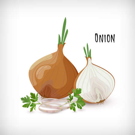 Onion whole, half, onion rings, green leaves, roots, parsley in flat style. Vegetable organic eco bio farm product. Lettering Onion. Spice plant condiment collection. Vector illustration. Illustration