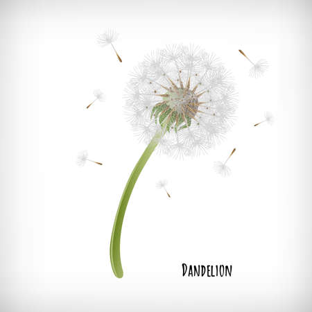 Dandelion plant with flying seeds in the wind isolated on white background. Lettering Dandelion. Hand drawn herb icon. Element for print, cards, web designs. Vector illustration.